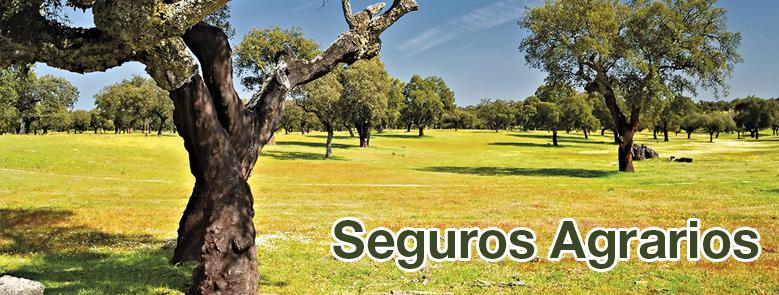 Caja Rural del Sur valora positivamente el respaldo de la Junta de Andalucía al sistema de seguros agrarios