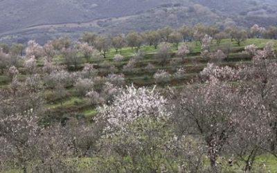 Jornadas en Caja Rural del Sur de Asaja Sevilla sobre el cultivo del almendro y cítricos