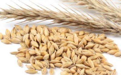 Préstamo Inversión Agraria