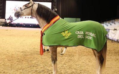 """El caballo """"Yucatán de Ramos"""", Campeón del Mundo en SICAB 2018"""