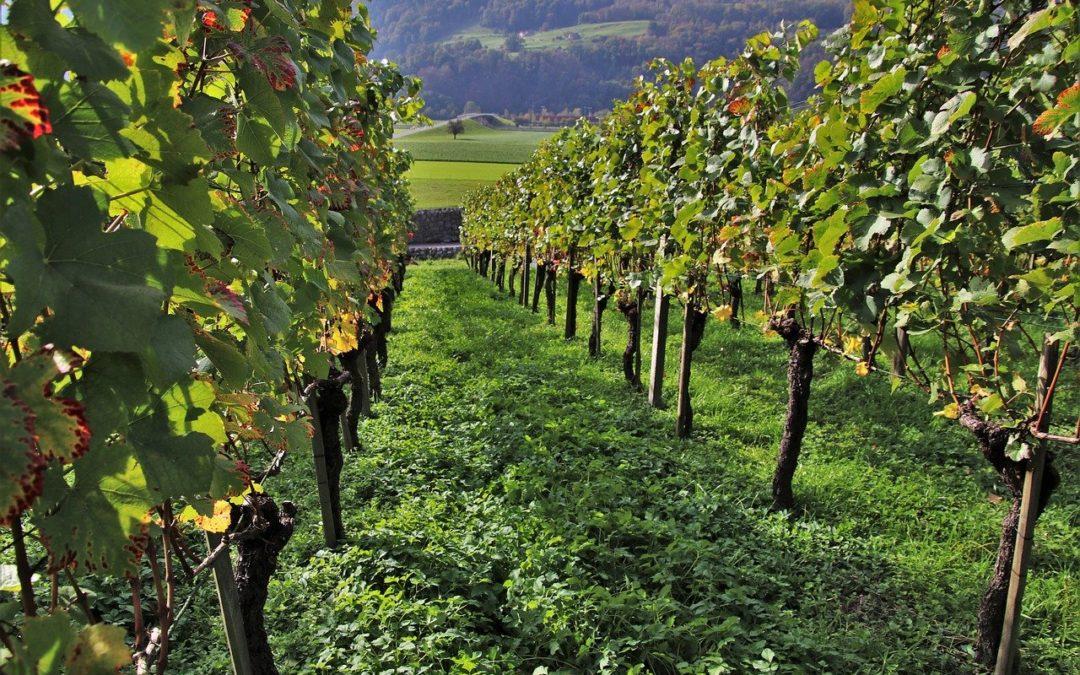 Las exportaciones de vino en España y en Andalucía: una mirada hacia los nuevos mercados