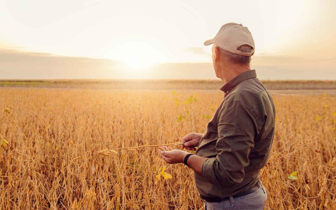 PAC 2021: En Caja Rural del Sur te ayudamos a gestionar tus Ayudas PAC