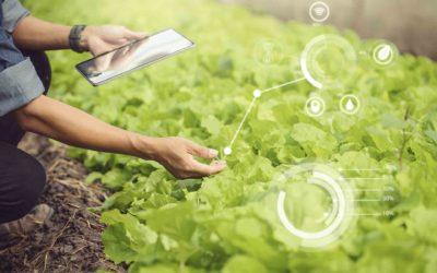 La revolución digital del campo: estas son las mejores tecnologías agrícolas